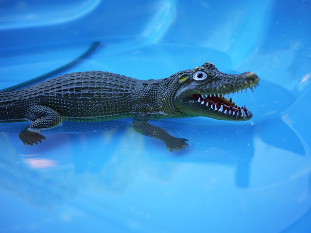 animal croc