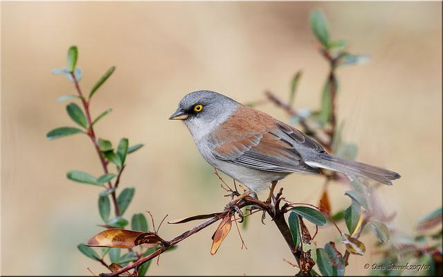 Bird capture image resolution [640×400]