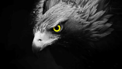 Download 66 Foto Gambar Burung Elang Terbang Di Angkasa  Paling Bagus