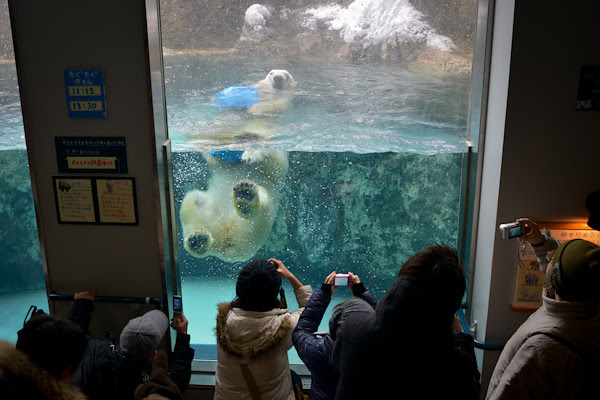 20130223-DSC_2119-polar_bear_zoo