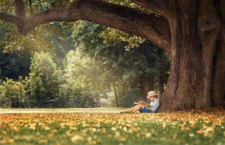 livres: Petit garçon lisant un livre sous grand tilleul