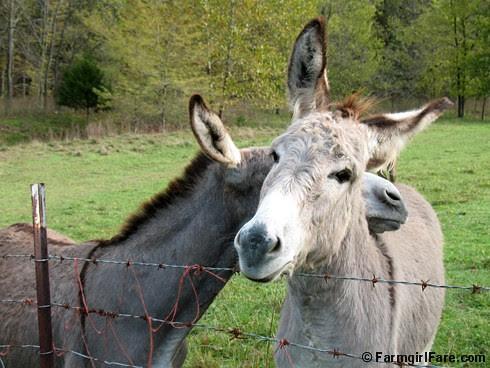The Daily Donkey 127