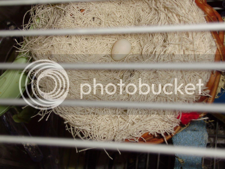 Egg, Anne and Henry - on blog