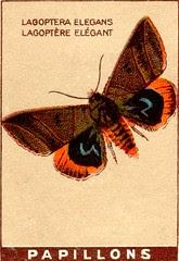 papill 10