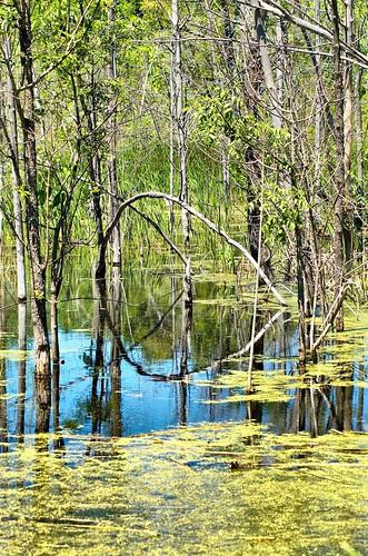 Orillia - Wetland in Summer (02)