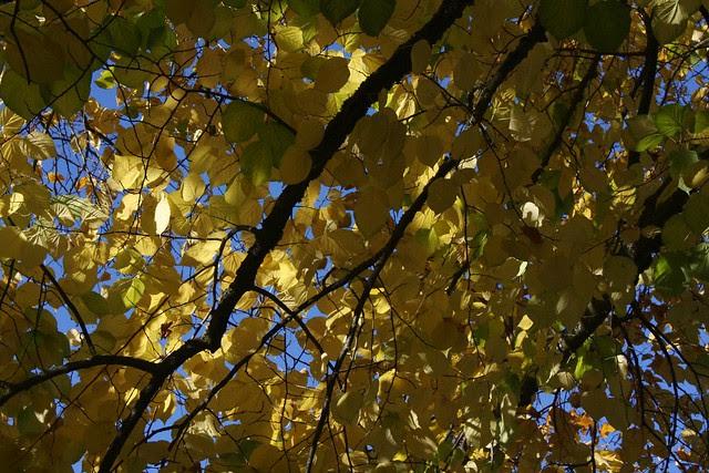 autumn, portland