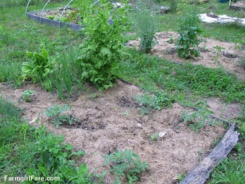 In the kitchen garden on 6-9-13 (11) - FarmgirlFare.com