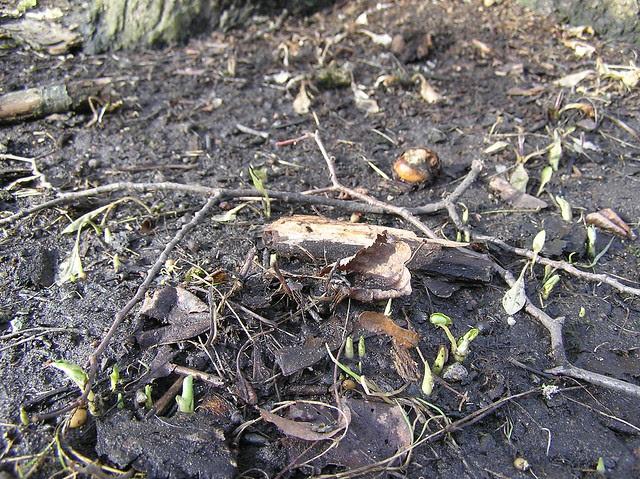 First plantlets in Kadrioru Park