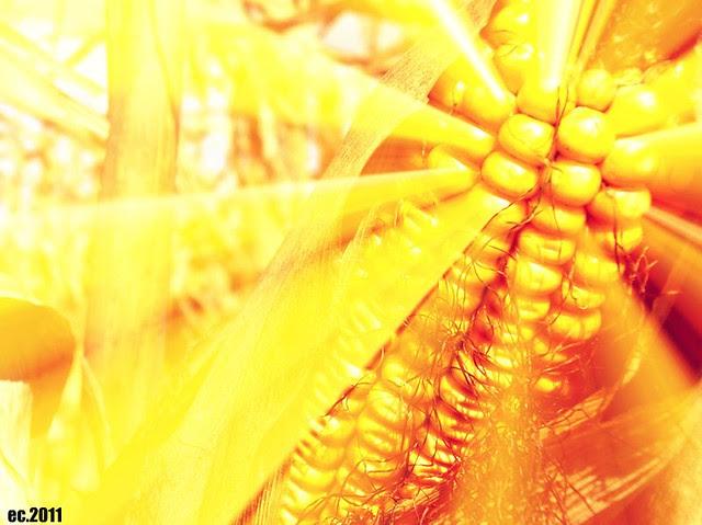 Corny Sunshine