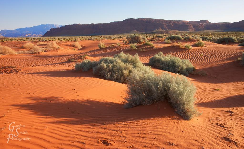 warner valley sand dunes and bush
