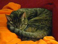 Maggie sleeping behind Jeni's legs