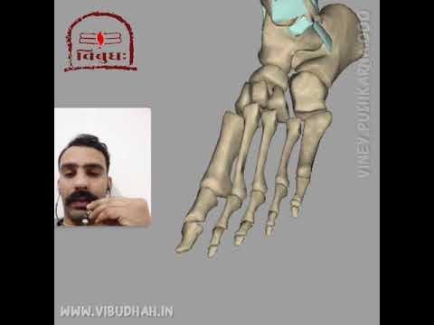 Feet Joints - Yoga Anatomy