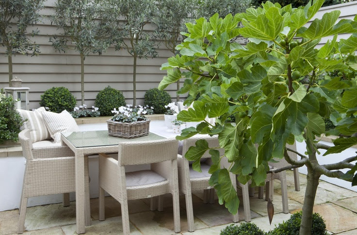 Leopoldina Haynes Garden
