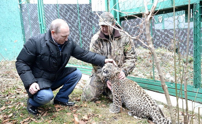 Visit to Persian Leopard