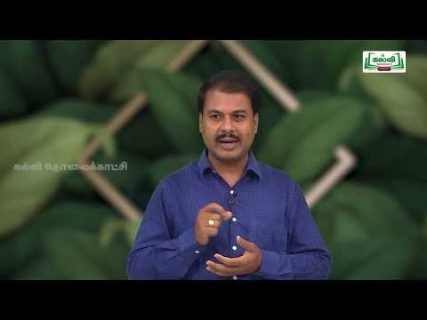 NEET   Botany Respiration  சுவாசித்தல் Kalvi TV
