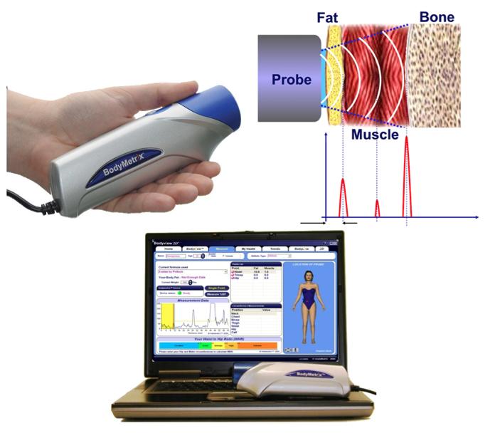 determine body fat percentage at home