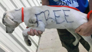 Dog Abandoned & Written On With Permanent Marker Finally Has Hope For A Better Life