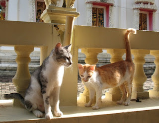 Cats at Thep Nimit temple