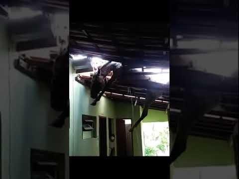 VÍDEO: Cavalo cai em telhado de prefeitura de cidade do interior de MG