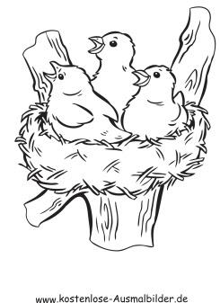 Ausmalbild Vogelnest