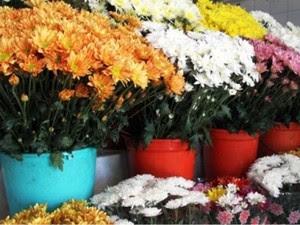 Tamanho e quantidade das flores pode variar entre os estabelecimentos (Foto: Divulgação/Procon-CG)