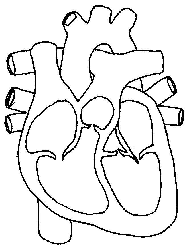 Blank Heart Diagram | Free Download Clip Art | Free Clip Art | on ...