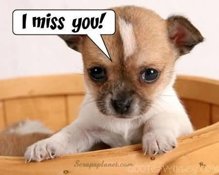 Cute Missing You Quotes Sayings Cute Missing You Picture Quotes