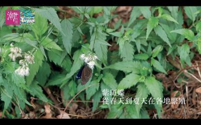貳獎之一《Svongvong》透過影像,展現台灣在地迸發的精彩。(張維?提供)