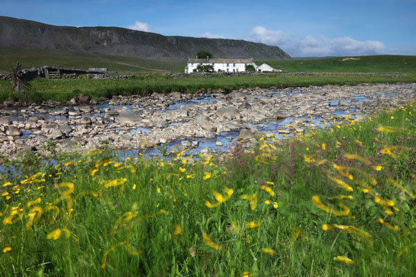 02D-4912 Cronkley Fell and Wheysike House Across Harwood Beck With Swirling Buttercups from the Pennine Way Footpath Upper Teesdale