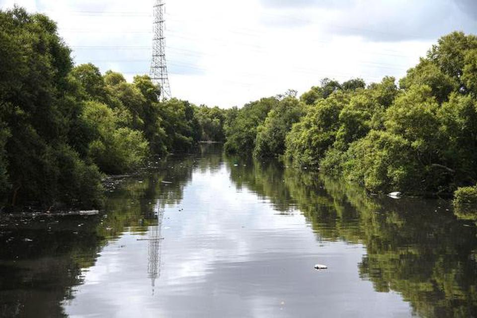 Mangrove Scheme