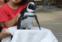 ペンギンを抱っこ
