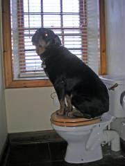 Ayrshire Dog Care Clients.JPG
