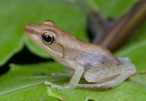 beautiful little frog IMG_5350 copy