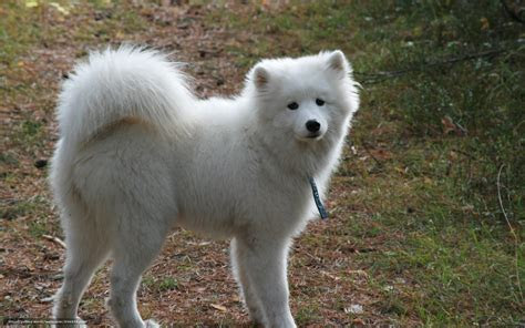 wallpaper animals animal dogs dog  desktop