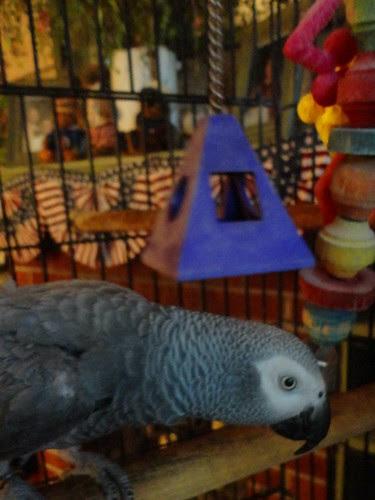 hello buffy the bird!