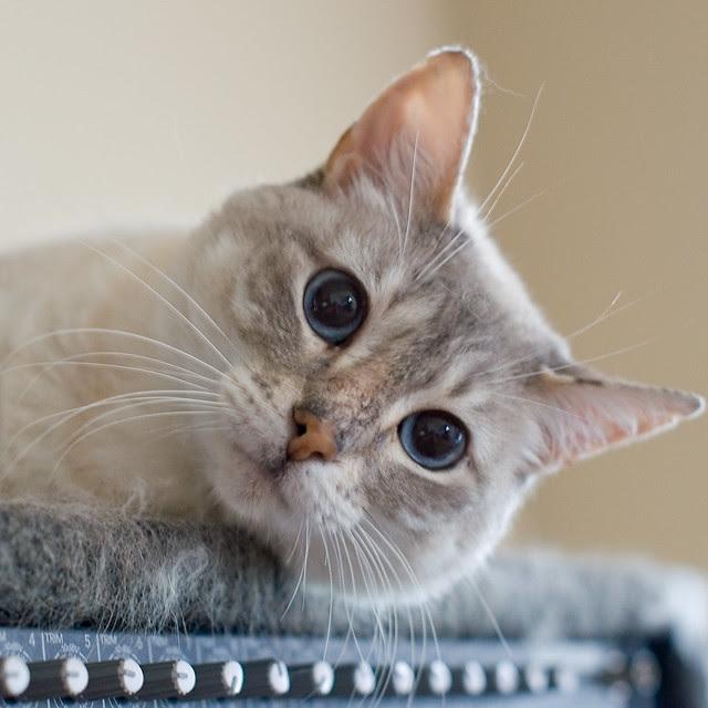 Pet Photography -free watermarking software