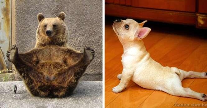 Animais que praticam ioga melhor que você