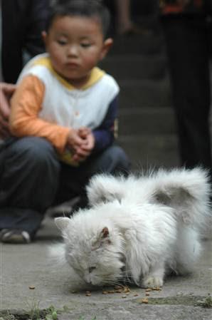 Kucing Bersayap ( foto : MSNBC.COM )