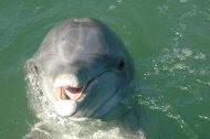 Beggar the dolphin was found dead Sept. 21