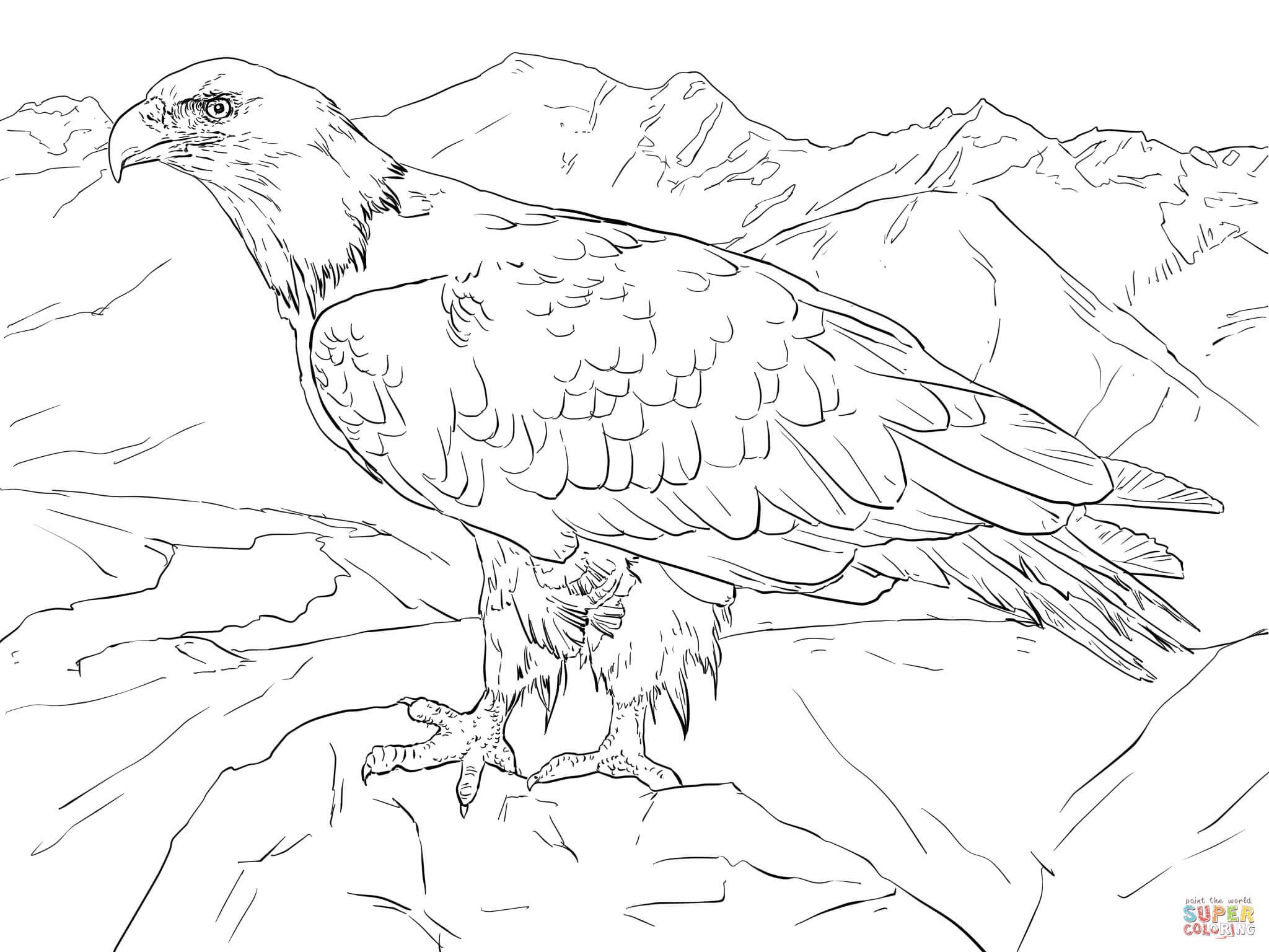 Klick das Bild Weißkopfseeadler