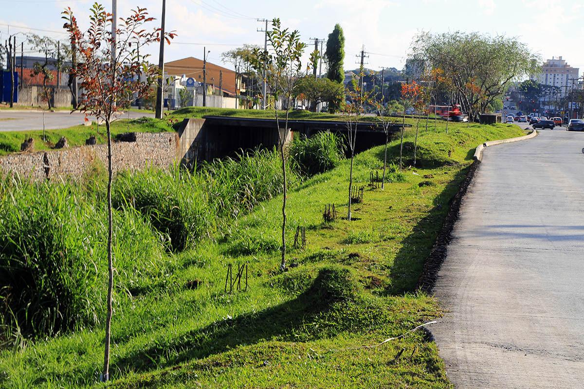 Curitiba ganhou 139 mil novas árvores em apenas três anos