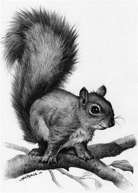 ideas  squirrel tattoo  pinterest acorn