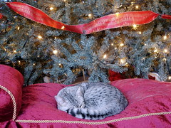 Curling up in front of the tree
