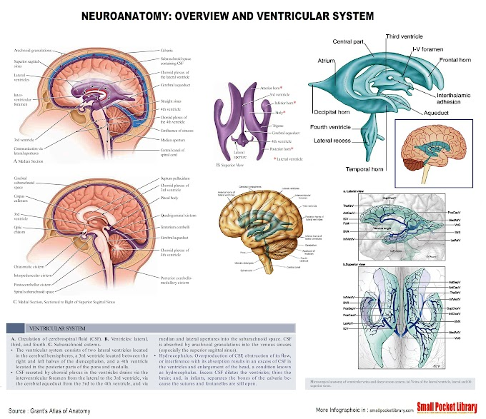 Poster : NEUROANATOMY: OVERVIEW AND VENTRICULAR SYSTEM Part 2