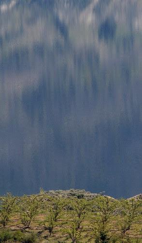 orchard-lake-reflection
