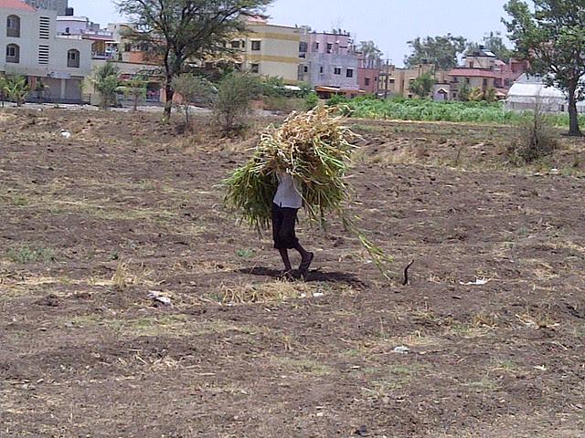 The last farmer - Baburao Shankarrao Tupe Road (D P Road) Hadapsar  - Visit Livogue - 1 BHK, 1.5 BHK & 2 BHK Flats at Malwadi Hadapsar, Pune 411028