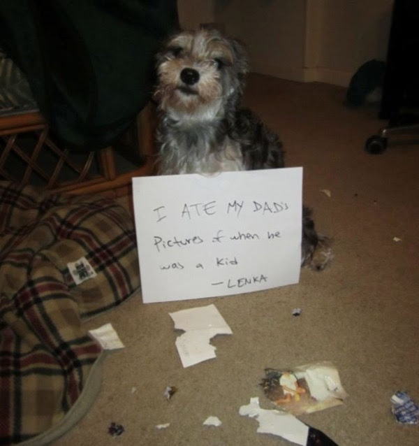 guilty-dogs-11