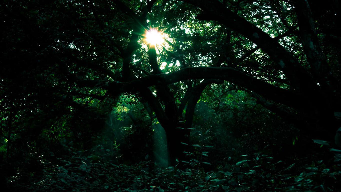 Dark Green Wallpaper HD - WallpaperSafari