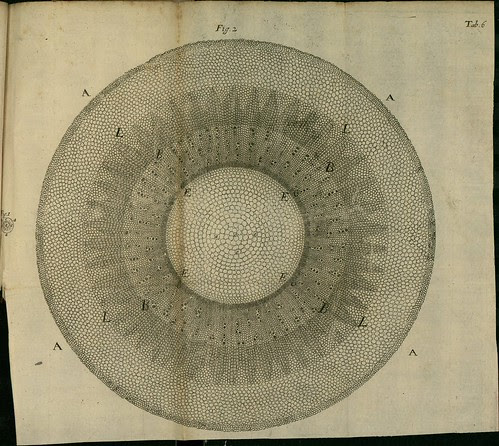 Phytological History 1673 Nehemiah Grew