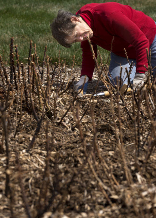 No damage to apple trees from cold temperatures, Arbor Day Farm